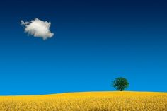 Beneath The Blue Sky II