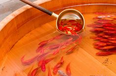 Riusuke Fukahori Paints Three-Dimensional Goldfish Embedded in Layers of Resin