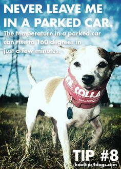 Never leave a dog in a parked car. The temperature can soar in minutes. www.koolcollar4dogs.com