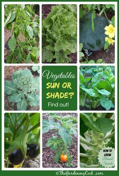 Not all vegetables are equal when it comes to sunlight. Some will take part shade. Get the breakdown at thegardeningcook.com/sun-or-shade/