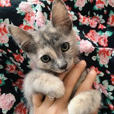 We cannot get over Leticia B.'s adorable kitty… and floral dress as photo background!