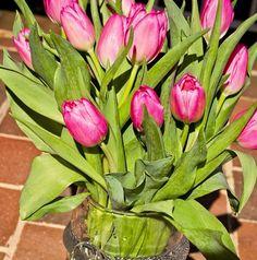 Pink Tulips #Spring tulip spring, pink tulip