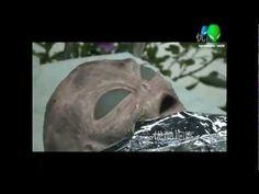 """""""UFO Dead Alien Body In Hongkong - Incredible!"""""""
