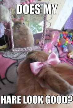 Bunny - www.meme-lol.com