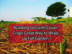 Building soil with cover crops great way to wrap up fall garden #soil #gardening
