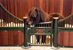 Mini Horse stable - so cute!