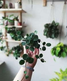Gorgeous indoor plant inspo