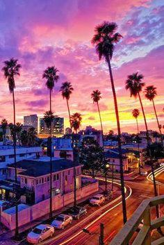 palm, ocean beach, california travel, venice beach, sunsets, light photography, los angeles, california living, place