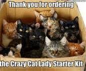 crazy cat lady starter kit - Bing Images
