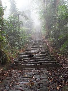 Stairs to Ciudad Perdida- the Lost City   Colombia: