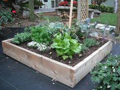 Farmer Jay Kitchen Garden hand made from naturally rot resistant cedar. With 2 kinds of lettuce, kale, cabbage, parsley, oregano, thyme, rosemary, spearmint, snapdragons, and allysum.