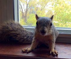 My rescued squirrel.