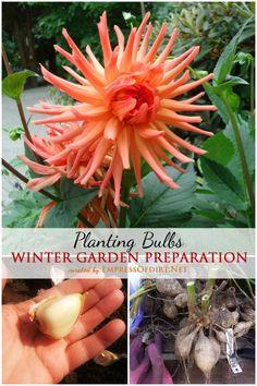 Winter Garden Prepartion: Planting Bulbs | empressofdirt.net