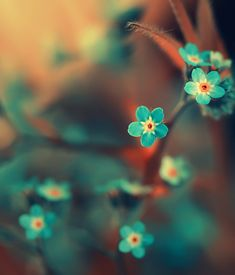 vibrant turquoise and orange... orang, photograph, blue flowers, color combos, teal, a tattoo, aqua, blossom, little flowers