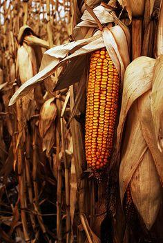Harvest season <3