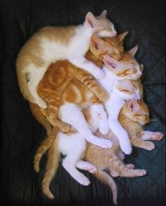 Stack of Cats