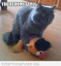 Lol!   #funnypics, #humor, #lol Visit http://everythingfunny.org.for/?utm_campaign=coschedule&utm_source=pinterest&utm_medium=Everything%20Funny%20(Funny%20Caption%20Pictures) more funny pics