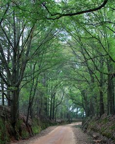 Down my dirt road, Pike County, Alabama