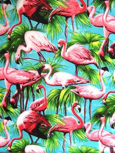 Can't get more tropical then pink flamingo's