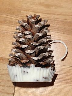 Pinecone fire starters!