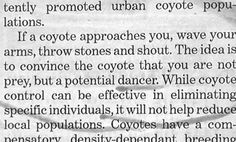 Newsflash!  Coyotes are terrified of dancers!