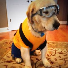 Minion Doggie