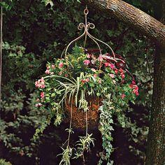 Spider Plant, Ferns, Ivy, Begonias & Impatiens