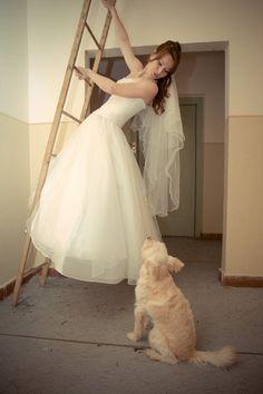 A playful wedding pet shot from @Saneesh Sukumaran Sukumaran sukumaran #wedding #pets