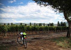 wines, bike tuscanysomeday, tuscan vineyard, blog, italy, itali wine