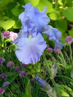 Love iris.