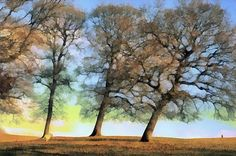 Being with trees by Heidi Anne Morris