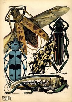 pochoir insects