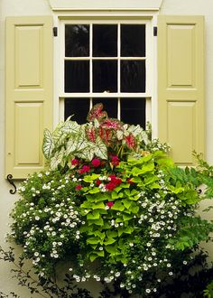 gorgeous window box: caladium, sweet potato vine, geranium, petunia