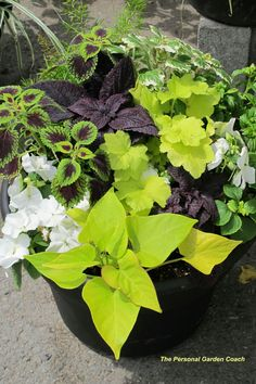 Love!  Colius and sweet potato vine Planter Container gardening Patio Front porch Plants Annuals Perennials Garden design