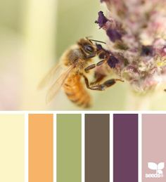 Polinated Palette: Butter Yellow, Sunshine Orange, Sage Green, Distressed Brown, Royal Purple and Freesia