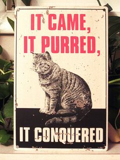 It came, it purred, it conquered.