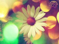 'Hippy flower' by alexia miles on artflakes.com as poster or art print $16.63