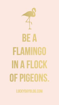 """Be a flamingo in a flock of pigeons."""