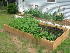 Raised Garden Beds - We've got some great tips for you!