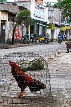 street fauna - Ho Chi Minh, Ho Chi Minh