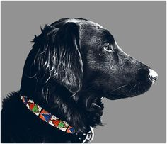 Beaded dog collars by Melrose & Mutt  #dogs #collars