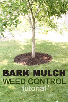 Install bark mulch for a healthier tree.  See how with our tutorial at Remodelaholic.com