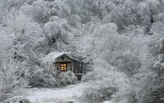 Tiny cabin in winter forest.