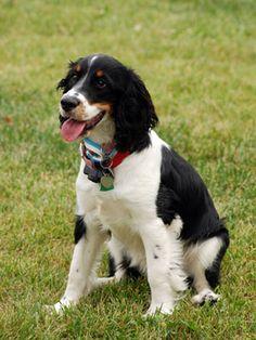 11 Medium Sized Dogs - Popular Medium Dog Breeds - Good Housekeeping