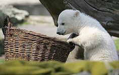 What you got in the basket for me?