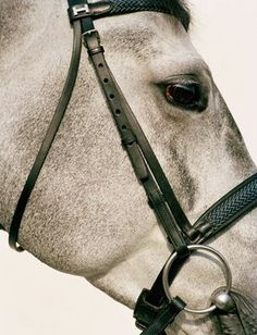 Habitually Chic®: H is for Horse and Hermes