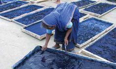 indigo in Bangladesh