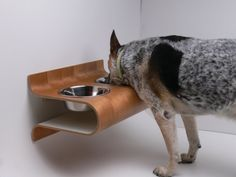 wall-mounted pet feeder