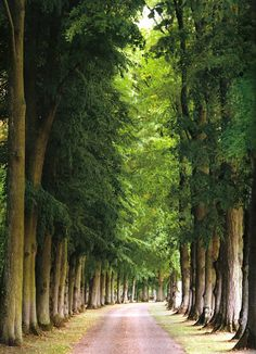 Allee - Chateau de Fontenay in France