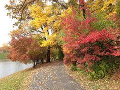 Walking path around the pond.
